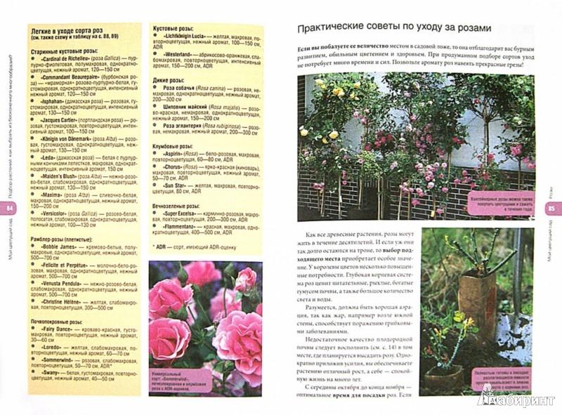 Иллюстрация 1 из 33 для Мой цветущий сад. Простые методы создания клумб - Уте Бауэр | Лабиринт - книги. Источник: Лабиринт
