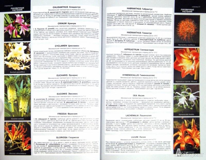 Иллюстрация 1 из 12 для Все о теплицах и зимних садах - Дэвид Хессайон | Лабиринт - книги. Источник: Лабиринт