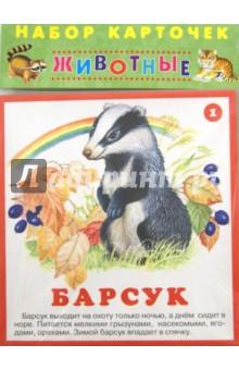 Набор карточек. Животные djeco набор карточек для раскрашивания животные