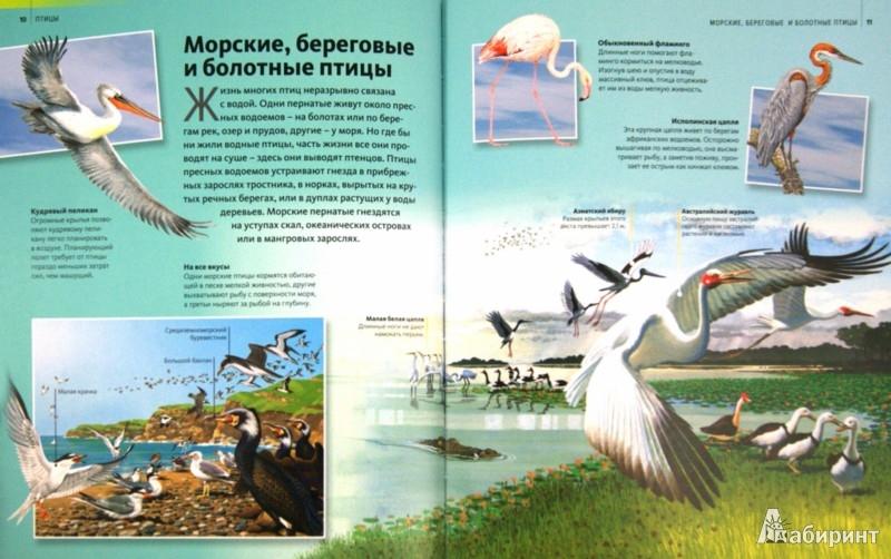 Иллюстрация 1 из 16 для Птицы   Лабиринт - книги. Источник: Лабиринт