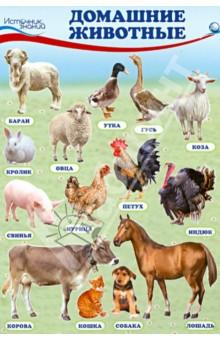 """Комплект познавательных мини-плакатов """"Домашние, лесные животные, фрукты и ягоды, овощи"""""""