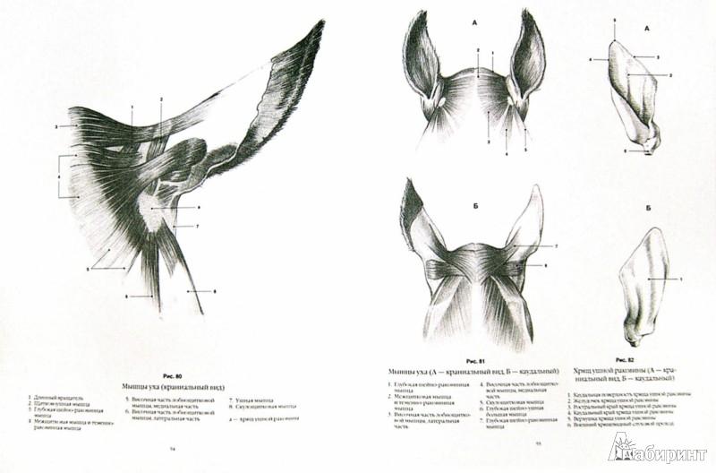 Иллюстрация 1 из 7 для Анатомический рисунок. Животные - Суньоги, Фехер   Лабиринт - книги. Источник: Лабиринт