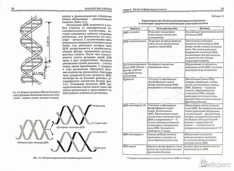 Иллюстрация 1 из 4 для Биология клетки. Учебное пособие - Никитин, Адоева, Захаркив | Лабиринт - книги. Источник: Лабиринт