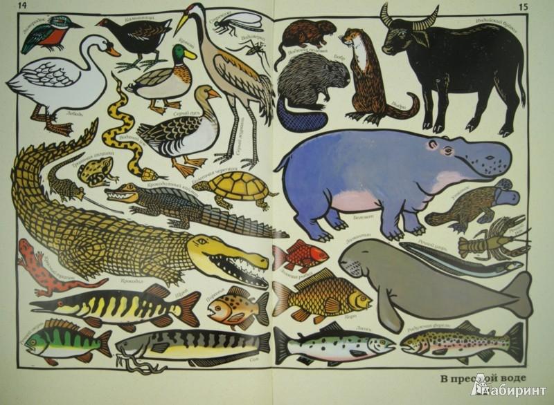 Иллюстрация 1 из 12 для Такие разные животные - Жоэль Жоливе   Лабиринт - книги. Источник: Лабиринт
