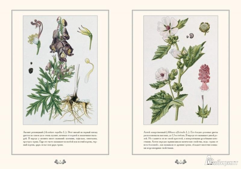 Иллюстрация 1 из 5 для Медоносные растения - Е. Дуванова   Лабиринт - книги. Источник: Лабиринт