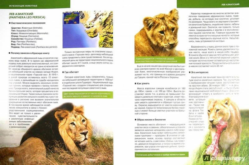 Иллюстрация 1 из 16 для Красная книга. Животные мира - Скалдина, Слиж | Лабиринт - книги. Источник: Лабиринт