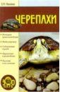 Сбитнева Евгения Черепахи