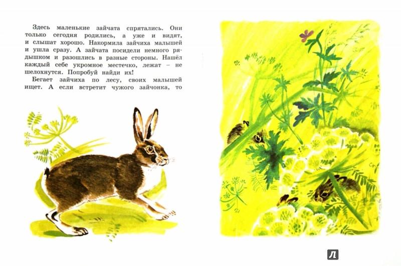 Иллюстрация 1 из 47 для Как заяц в лесу живёт - Вера Чаплина | Лабиринт - книги. Источник: Лабиринт