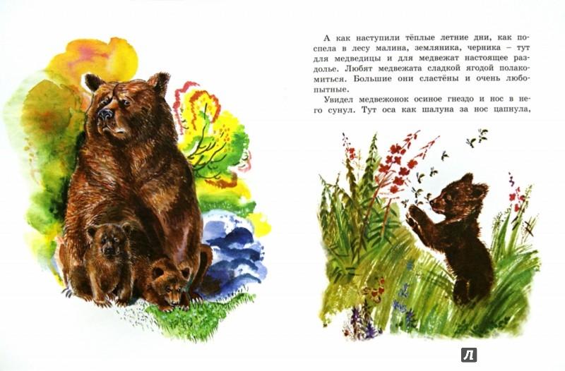 Иллюстрация 1 из 44 для Как медведь в лесу живёт - Вера Чаплина | Лабиринт - книги. Источник: Лабиринт