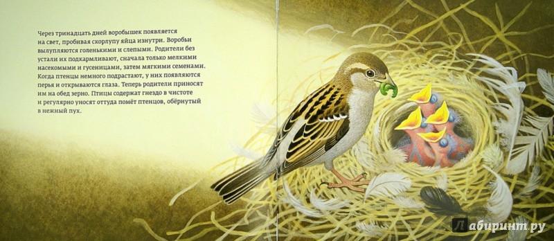 Иллюстрация 1 из 30 для Год с воробьями - Томас Мюллер   Лабиринт - книги. Источник: Лабиринт