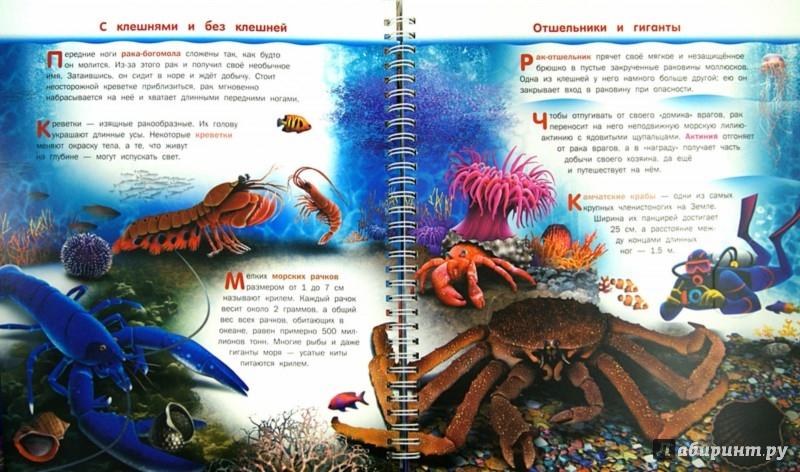 Иллюстрация 1 из 14 для Подводный мир - Бабенко, Алексеев | Лабиринт - книги. Источник: Лабиринт