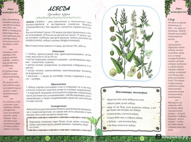 Иллюстрация 1 из 45 для Иллюстрированный травник для всей семьи | Лабиринт - книги. Источник: Лабиринт