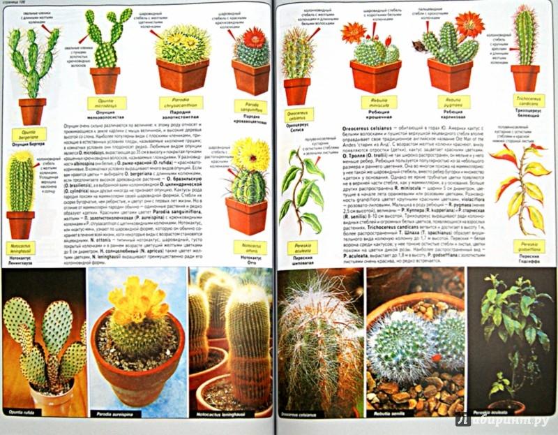 Иллюстрация 1 из 38 для Все о комнатных растениях - Дэвид Хессайон | Лабиринт - книги. Источник: Лабиринт