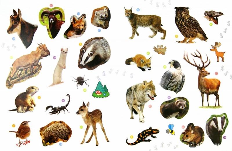 Иллюстрация 1 из 19 для Лесные животные. Энциклопедия животных с наклейками | Лабиринт - книги. Источник: Лабиринт