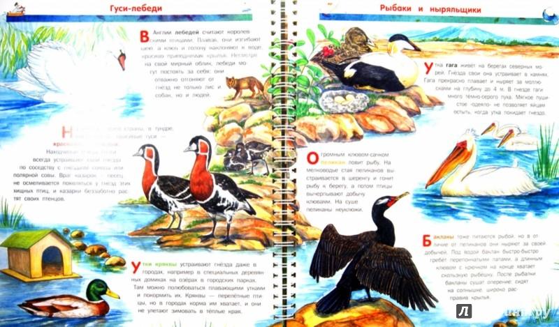 Иллюстрация 1 из 14 для Птицы - Владимир Бабенко | Лабиринт - книги. Источник: Лабиринт