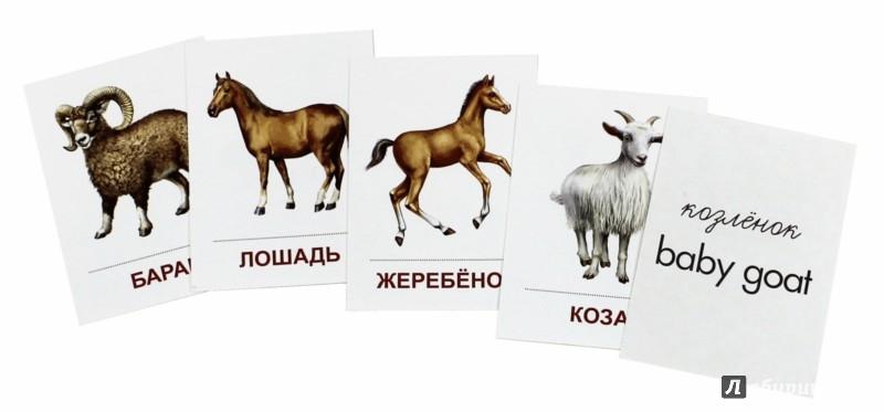 """Иллюстрация 1 из 12 для Раздаточные карточки """"Домашние животные""""   Лабиринт - книги. Источник: Лабиринт"""