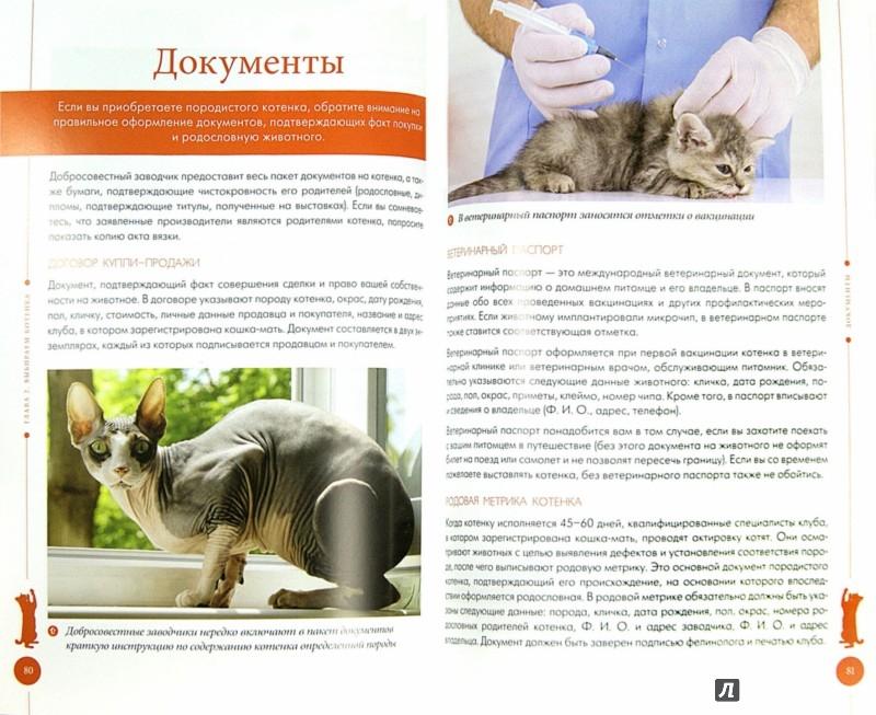 Иллюстрация 1 из 7 для Ваша кошка. Практическое руководство по уходу - Анастасия Красичкова | Лабиринт - книги. Источник: Лабиринт