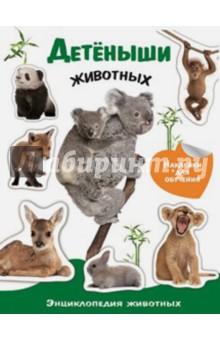 Купить Детеныши животных. Энциклопедия животных с наклейками, Стрекоза, Животный и растительный мир