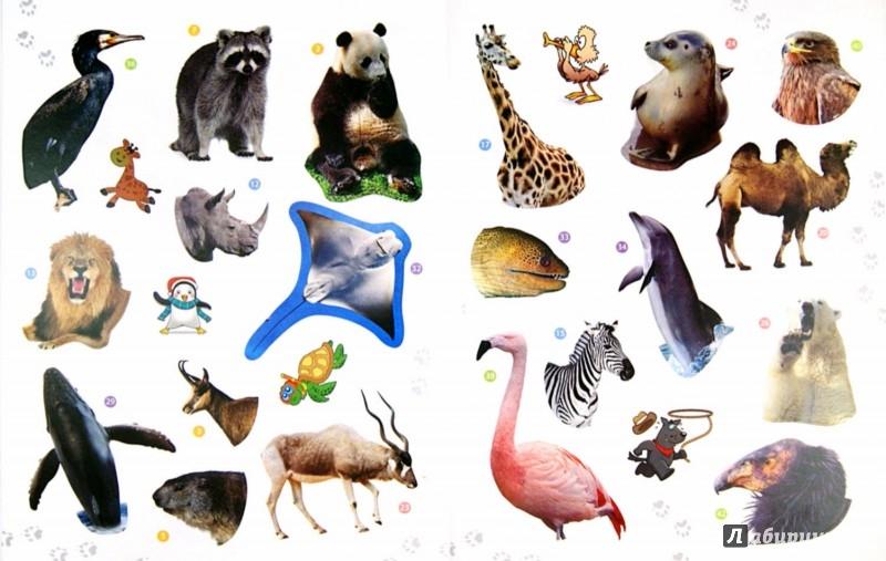 Иллюстрация 1 из 19 для Животные от Севера до Юга. Энциклопедия животных с наклейками   Лабиринт - книги. Источник: Лабиринт