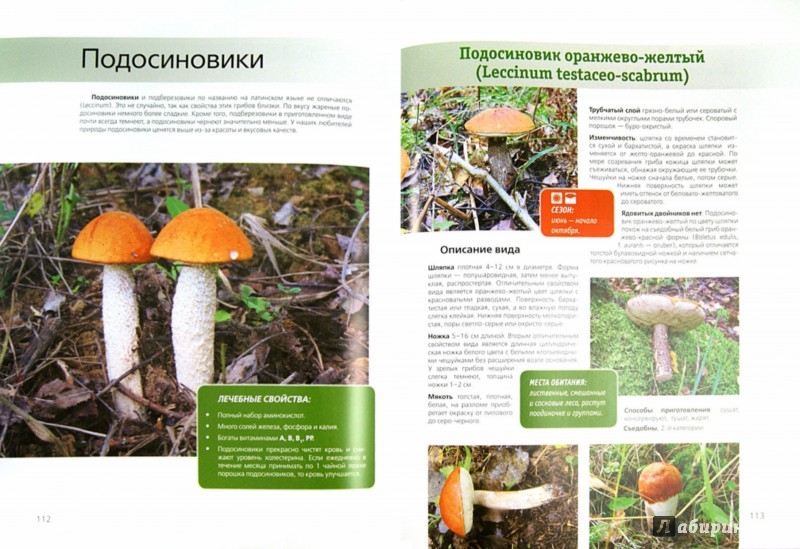 Иллюстрация 1 из 8 для Библия грибника - Матанцев, Матанцева, Кочанова   Лабиринт - книги. Источник: Лабиринт