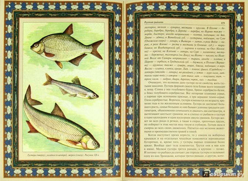 Иллюстрация 1 из 16 для Русская рыбалка | Лабиринт - книги. Источник: Лабиринт