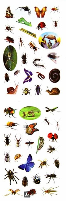 Иллюстрация 1 из 7 для 100 наклеек. Мир насекомых | Лабиринт - книги. Источник: Лабиринт