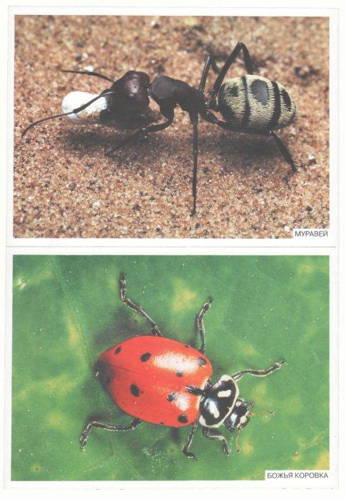 Иллюстрация 1 из 14 для Мир в картинках: Насекомые 3-7 лет | Лабиринт - книги. Источник: Лабиринт