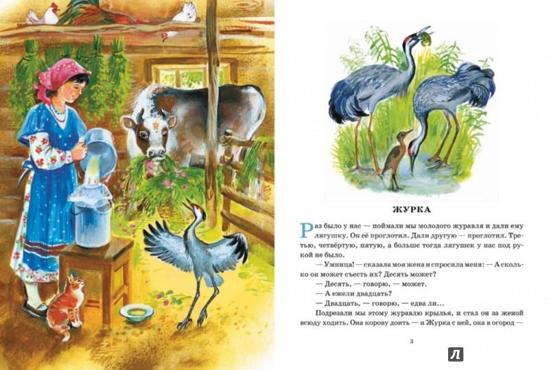 Иллюстрация 1 из 80 для Охота за бабочкой - Михаил Пришвин | Лабиринт - книги. Источник: Лабиринт