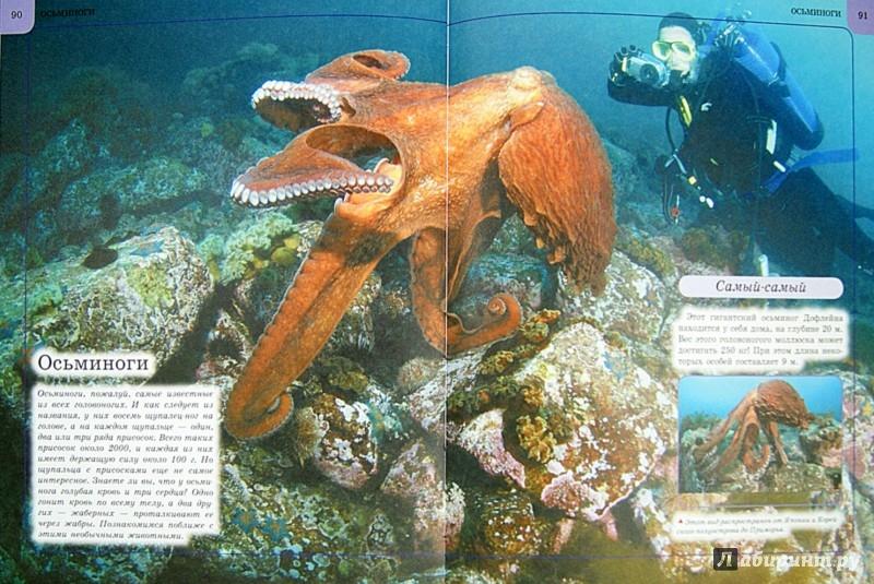 Иллюстрация 1 из 23 для Подводный мир - Анна Спектор   Лабиринт - книги. Источник: Лабиринт