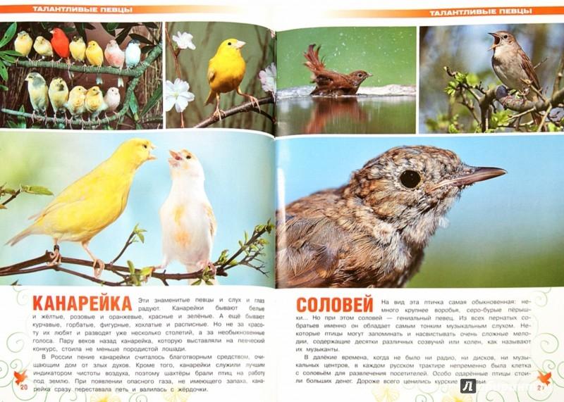 Иллюстрация 1 из 4 для Чудо в перьях. Удивительная жизнь птиц - О. Куронова | Лабиринт - книги. Источник: Лабиринт