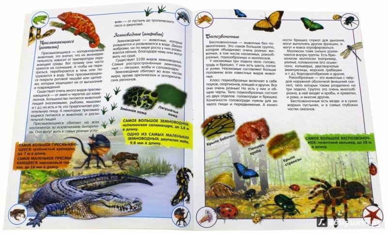 Иллюстрация 1 из 43 для Наша планета. Животные - Кэти Хьюот | Лабиринт - книги. Источник: Лабиринт