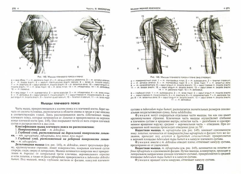 Иллюстрация 1 из 16 для Нормальная анатомия человека. Учебник для медицинских вузов. В 2-х томах - Иван Гайворонский | Лабиринт - книги. Источник: Лабиринт