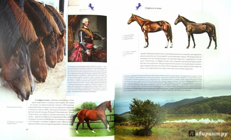 Иллюстрация 1 из 8 для Лошади - Онуфриенко, Кищук | Лабиринт - книги. Источник: Лабиринт