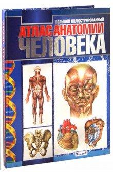 Большой иллюстрированный атлас анатомии человека анна спектор большой иллюстрированный атлас анатомии человека