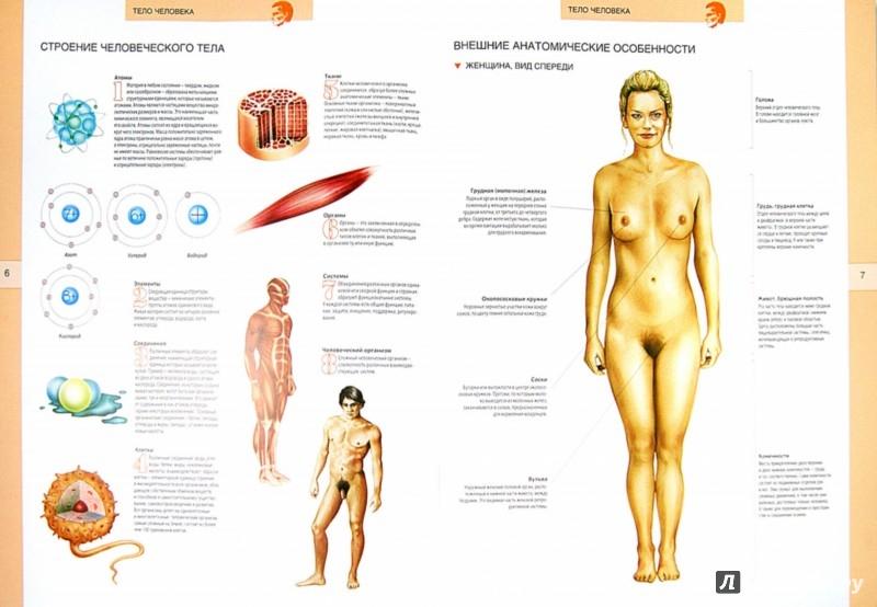 Иллюстрация 1 из 16 для Большой иллюстрированный атлас анатомии человека | Лабиринт - книги. Источник: Лабиринт