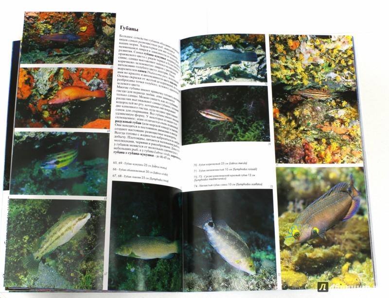 Иллюстрация 1 из 7 для Рыбы Средиземного моря - Андреа Гизотти | Лабиринт - книги. Источник: Лабиринт