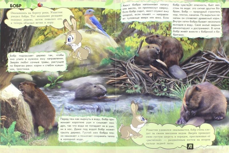 Иллюстрация 1 из 15 для Где земляничная поляна? Дикие животные - Анна Макулина | Лабиринт - книги. Источник: Лабиринт