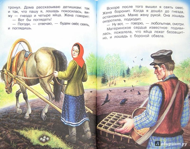 Иллюстрация 1 из 7 для Про птиц и зверей - Михаил Пришвин | Лабиринт - книги. Источник: Лабиринт
