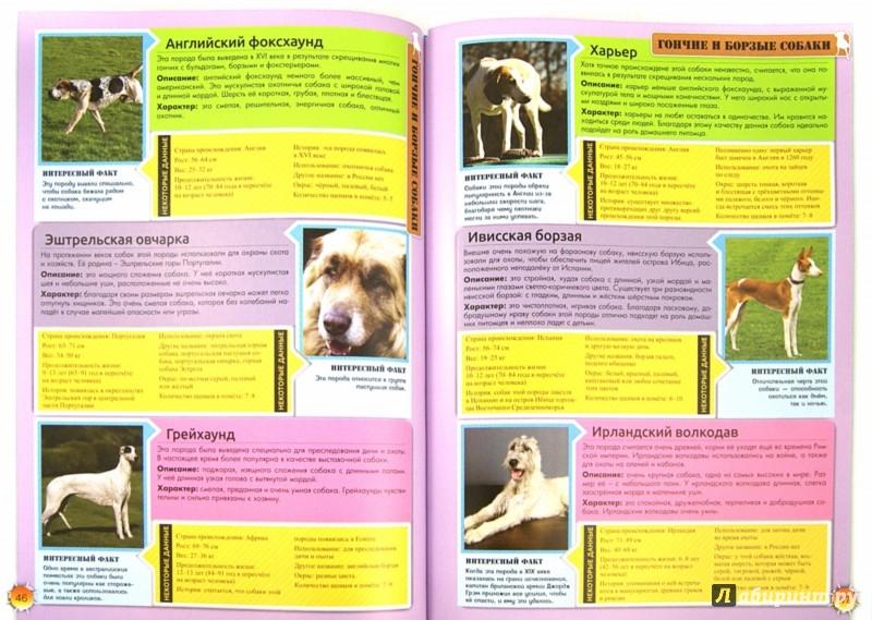 Иллюстрация 1 из 9 для Энциклопедия о собаках. Все о собаках | Лабиринт - книги. Источник: Лабиринт