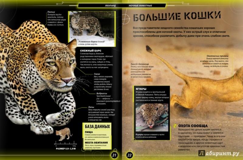 Иллюстрация 1 из 6 для Ночные животные - Бедуайер Камилла де ла | Лабиринт - книги. Источник: Лабиринт