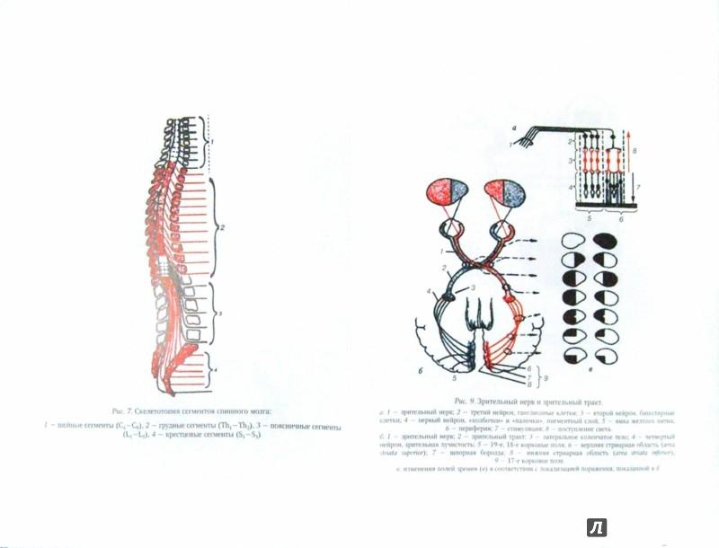 Иллюстрация 1 из 42 для Нервные болезни - Андреева, Одинак, Одинак, Базилевич | Лабиринт - книги. Источник: Лабиринт
