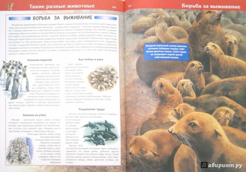 Иллюстрация 1 из 35 для Что? Кто? Зачем? Почему? Животные - Рублев, Скиба | Лабиринт - книги. Источник: Лабиринт