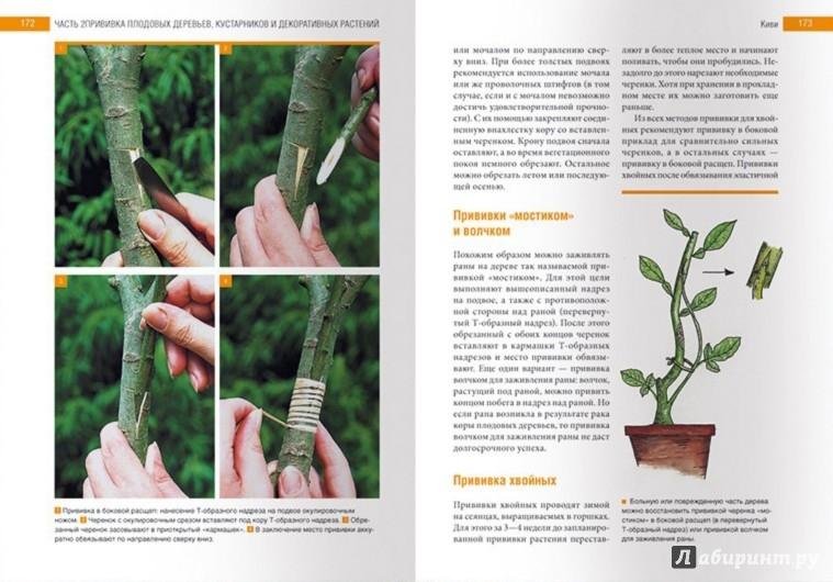 Иллюстрация 1 из 12 для Умная обрезка и прививка плодовых и декоративных деревьев и кустарников - Штангль, Клок | Лабиринт - книги. Источник: Лабиринт