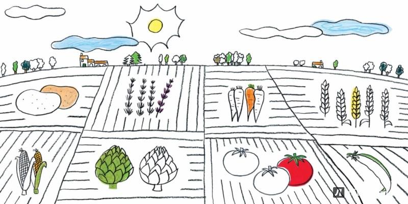 Иллюстрация 1 из 80 для Разноцветная ферма. Книжка-раскраска - Пито, Жерве | Лабиринт - книги. Источник: Лабиринт