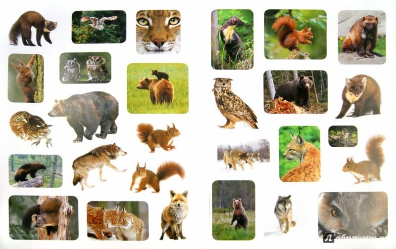 Иллюстрация 1 из 10 для Животный мир России + наклейки - Наталья Рубинштейн | Лабиринт - книги. Источник: Лабиринт