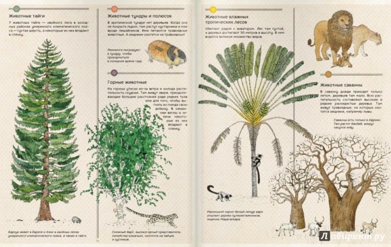 Иллюстрация 1 из 15 для Атлас животных - Аладжиди, Чукриэль | Лабиринт - книги. Источник: Лабиринт