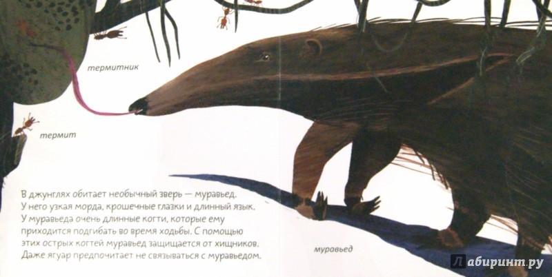 Иллюстрация 1 из 49 для Джунгли - Анна Веркина | Лабиринт - книги. Источник: Лабиринт