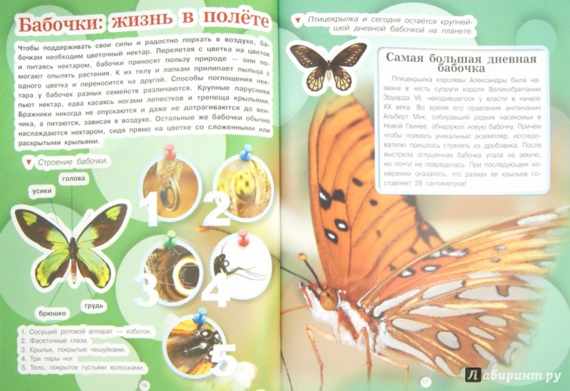 Иллюстрация 1 из 5 для Насекомые - Дмитрий Кошевар | Лабиринт - книги. Источник: Лабиринт