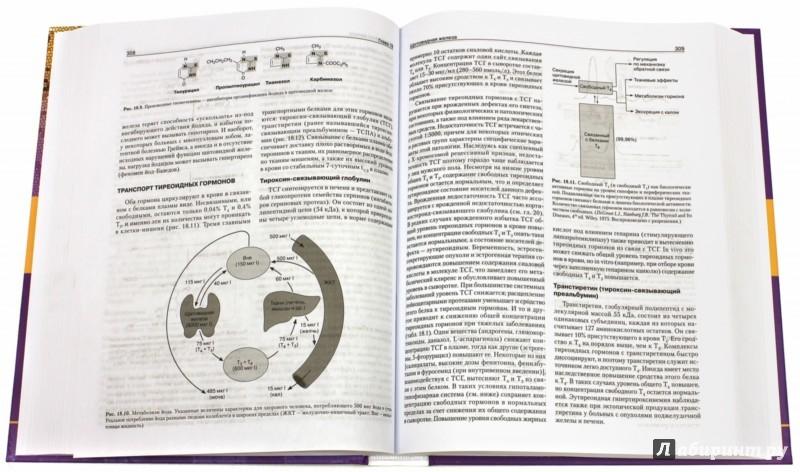 Иллюстрация 1 из 31 для Базисная и клиническая эндокринология. Книга 2 - Гарднер, Шобек | Лабиринт - книги. Источник: Лабиринт