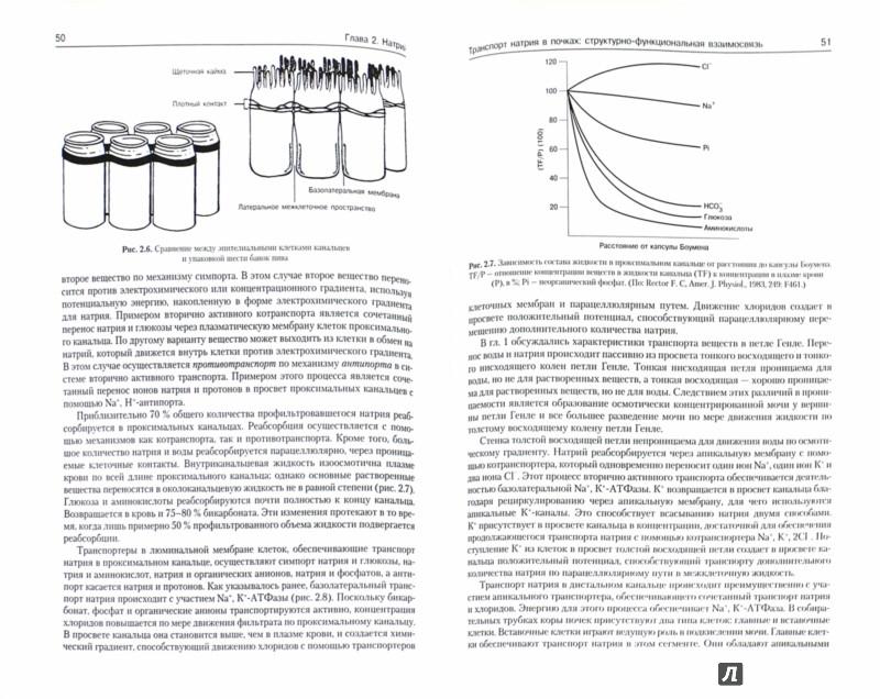 Иллюстрация 1 из 14 для Патофизиология почки - Джеймс Шейман | Лабиринт - книги. Источник: Лабиринт